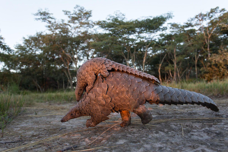 Universal Jurassic World Kids Jurassic Park Caja De Almuerzo Escolar Bolsa Dinosaurio Podían ser cuadrupedos o bípedos, tenían cuerpos musculosos, cuellos y largas colas, eran hervíboros y. universal jurassic world kids jurassic