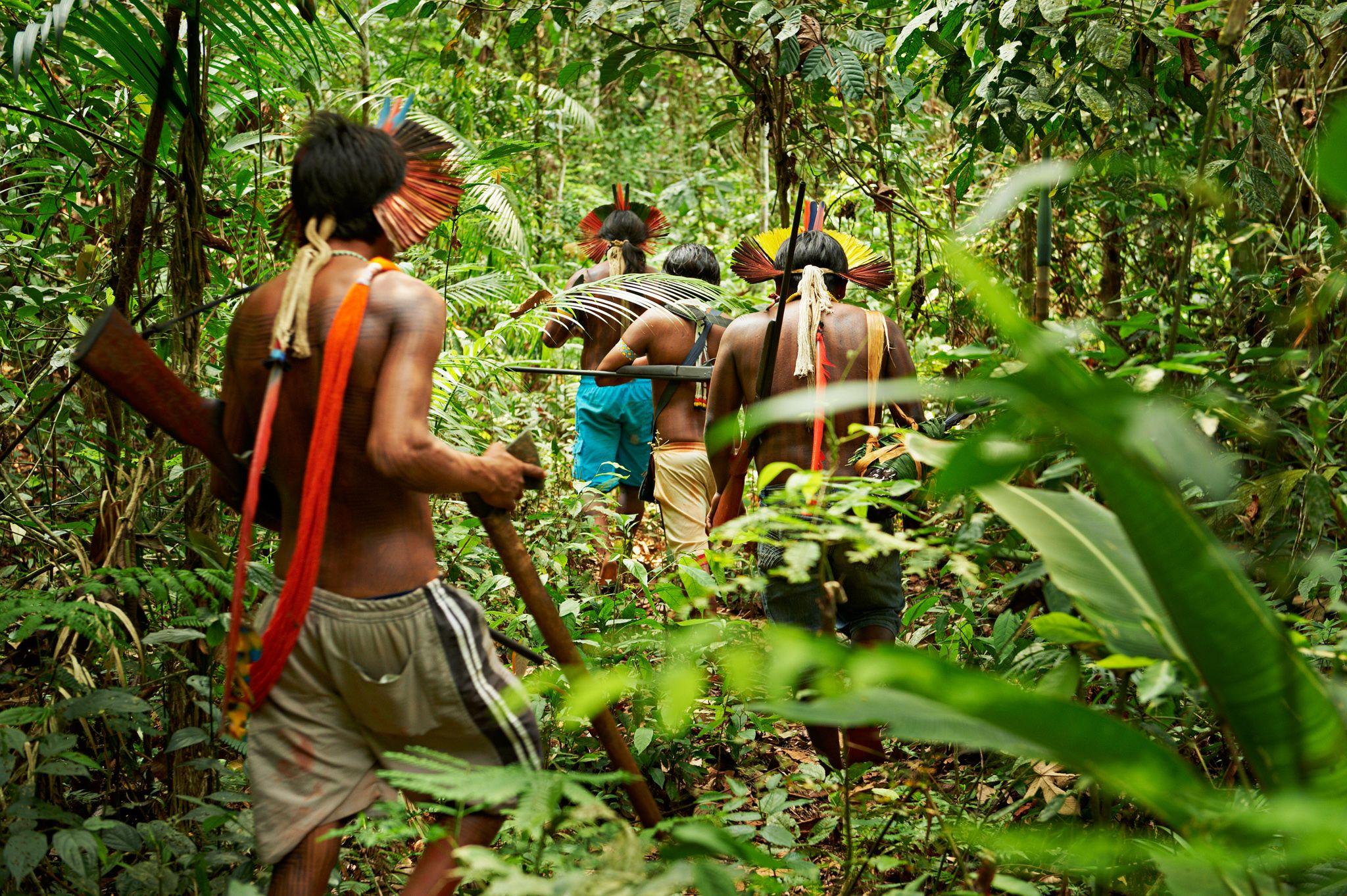 Guerreros de la selva tropical: cómo las tribus indígenas protegen ...