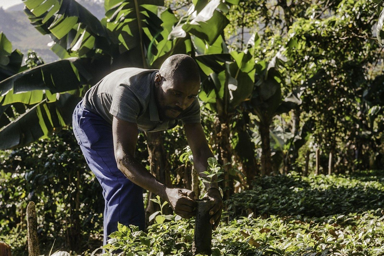 Zachariah Mukwinya, un agricultor de la aldea de Chavhanga en el distrito de Mutasa, ha percibido ...