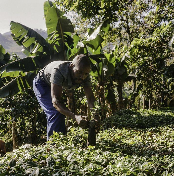Cultivar café para un mejor futuro en Zimbabue