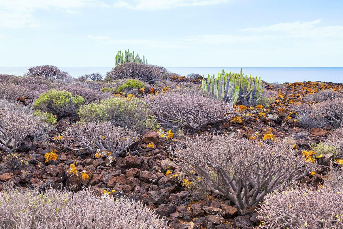 Islas Canarias, España