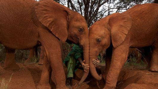 Nuevos datos sugieren por qué el cáncer rara vez afecta a los elefantes