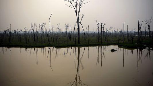 Amazonía en llamas: especies de peces en peligro si se destruye el hábitat ribereño