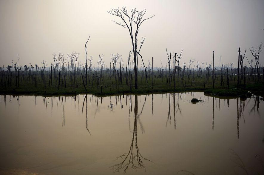 La selva amazónica en Brasil todavía está ardiendo, como lo muestra el bosque quemado de arriba, ...