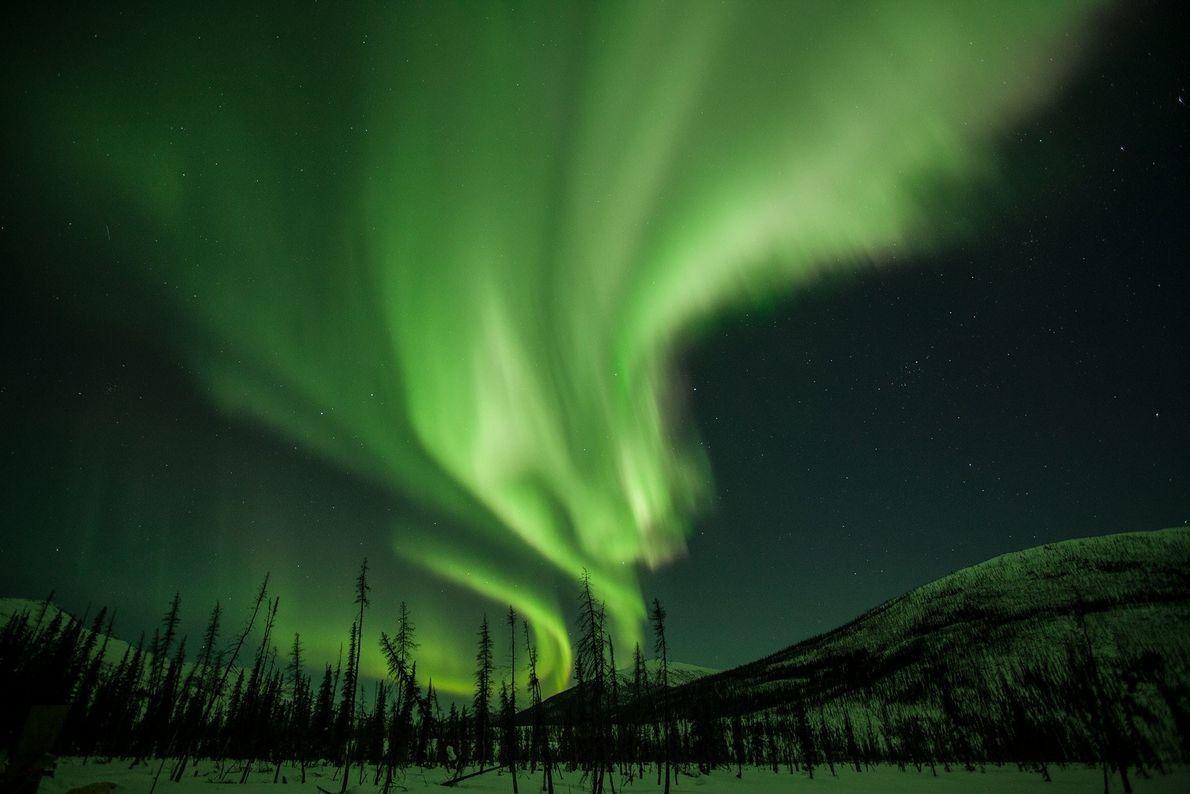 Cortinas de luz resplandecientes adornan el cielo nocturno de Alaska. Este espectáculo, conocido como aurora boreal ...