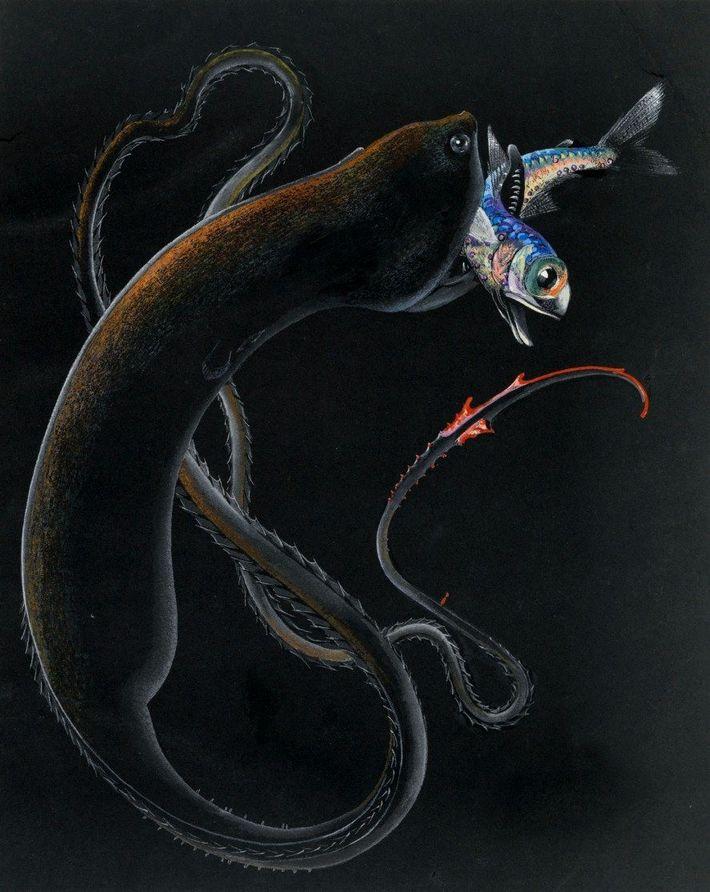 Else Bostelmann dio vida a criaturas nunca vistas del fondo marino con sus dibujos. En este ...