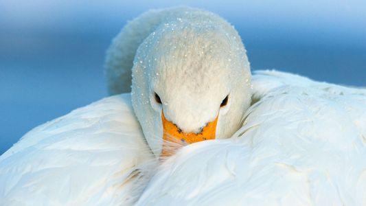 Descubre fantásticas aves de todo el mundo