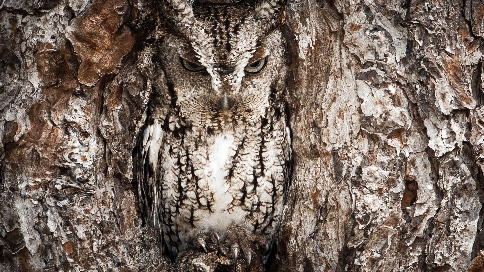¿Qué animales se esconden en estas fotos?