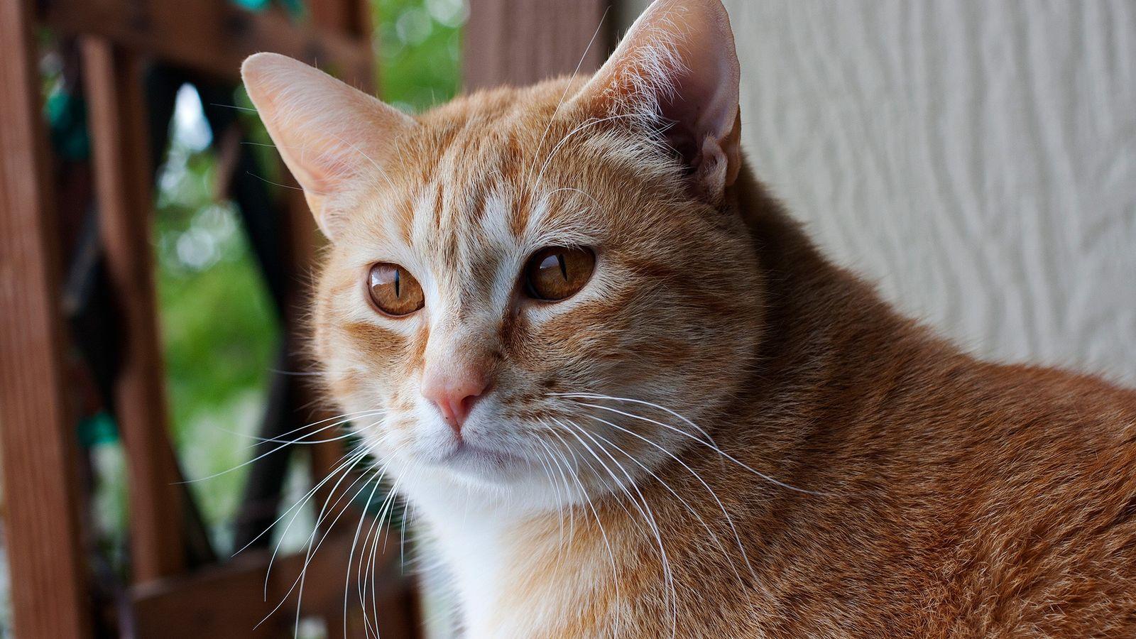 Los gatos vinculan sus nombres a recompensas, como la comida y las caricias.
