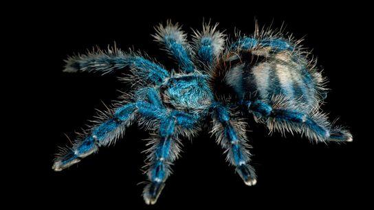01-creepy-spiders