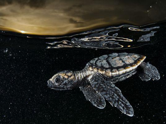 David Doubilet: el fotógrafo que nos muestra la vida oculta bajo el agua