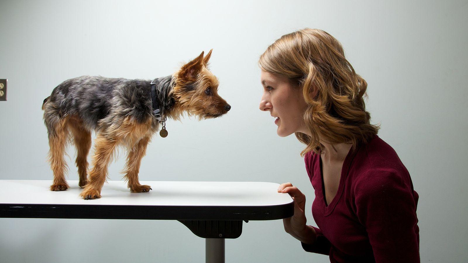 Un equipo de investigadores estudió las personalidades de 1.681 dueños y de sus respectivos perros. La ...