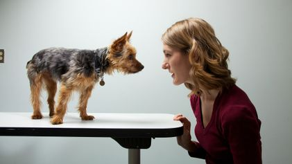 ¿Los perros pueden tener personalidades similares a sus dueños?