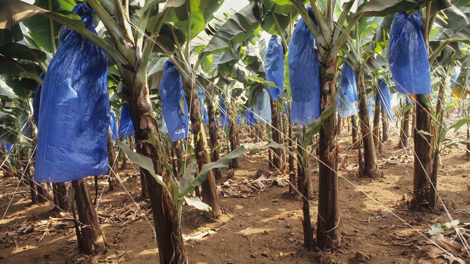 El plástico se utiliza a lo largo de todo el proceso de producción de alimentos. En ...