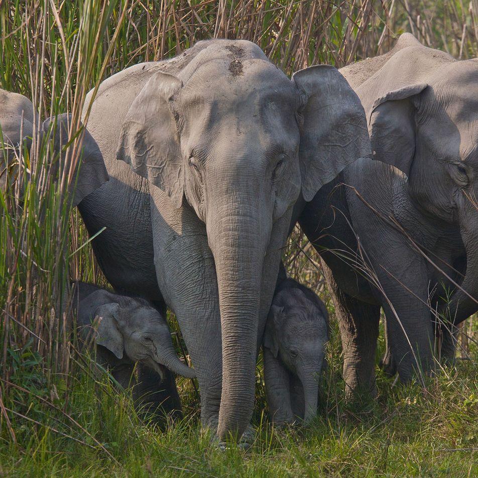 Aumenta rápidamente el comercio de piel de elefante