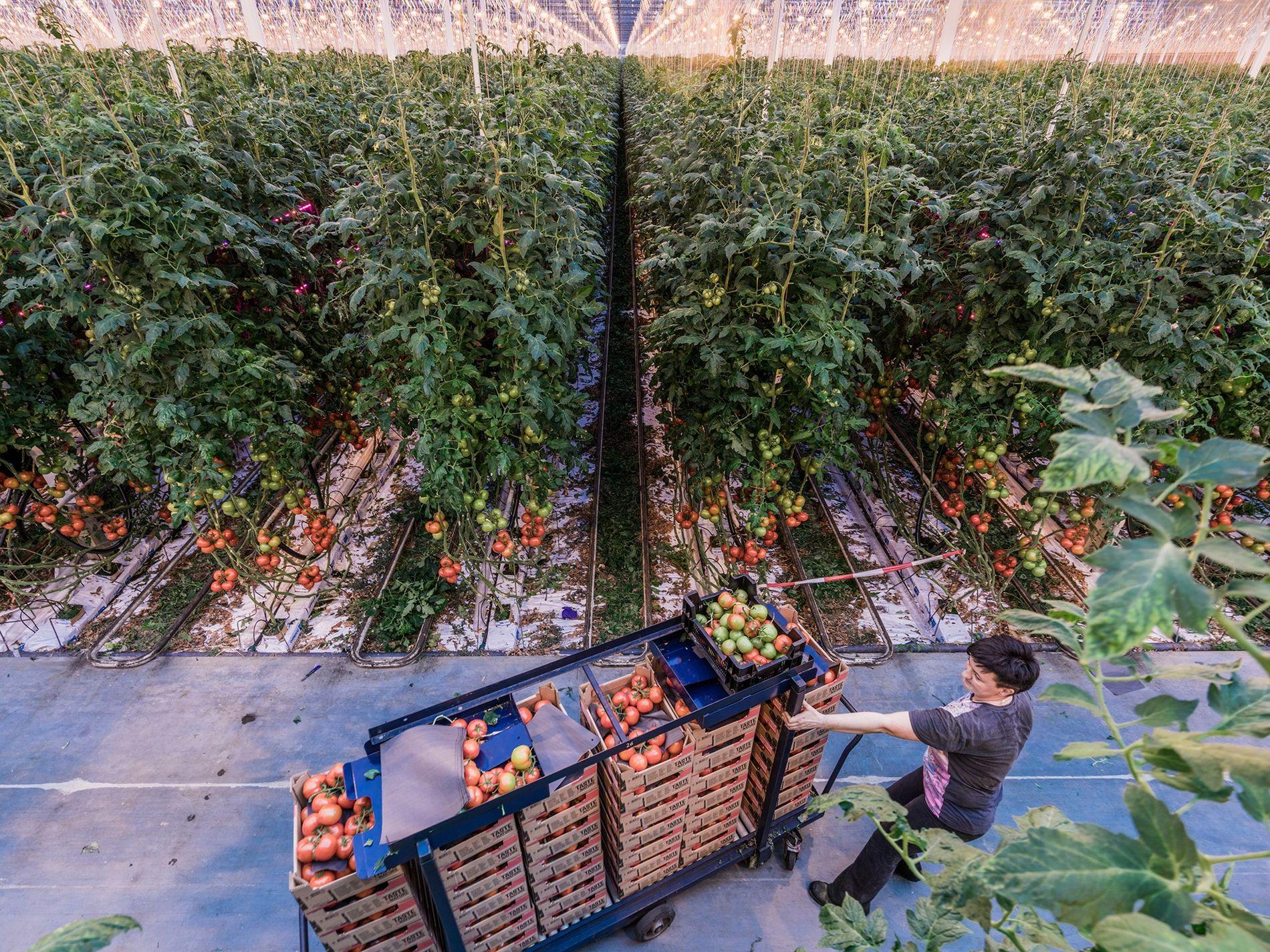 Un informe reciente analiza opciones que garanticen una alimentación saludable para una población mundial en crecimiento, ...