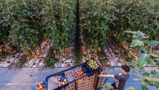 ¿Cómo alimentar a la población mundial sin destruir el planeta?