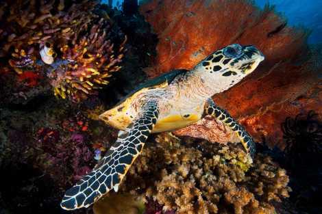 Comercializar productos de tortugas marinas es ilegal, pero en Japón, la venta continúa