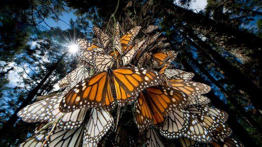 ¿Por qué las poblaciones de insectos están disminuyendo?