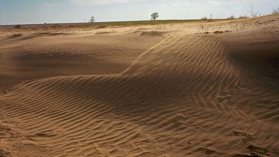 La erosión del viento provoca pérdidas en la capa superior de tierras de cultivo cuyo uso ...