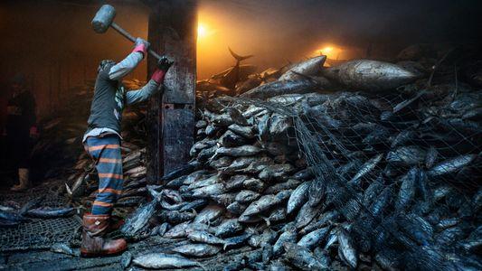 El mar se está quedando sin peces, a pesar de las promesas de las naciones de ...