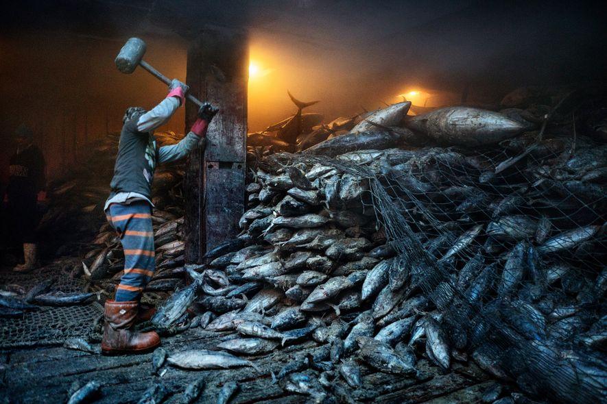 El mar se está quedando sin peces, a pesar de las promesas de las naciones de …