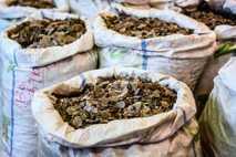 Estas bolsas representan una pequeña porción de un envío ilegal de nueve toneladas de escamas de ...