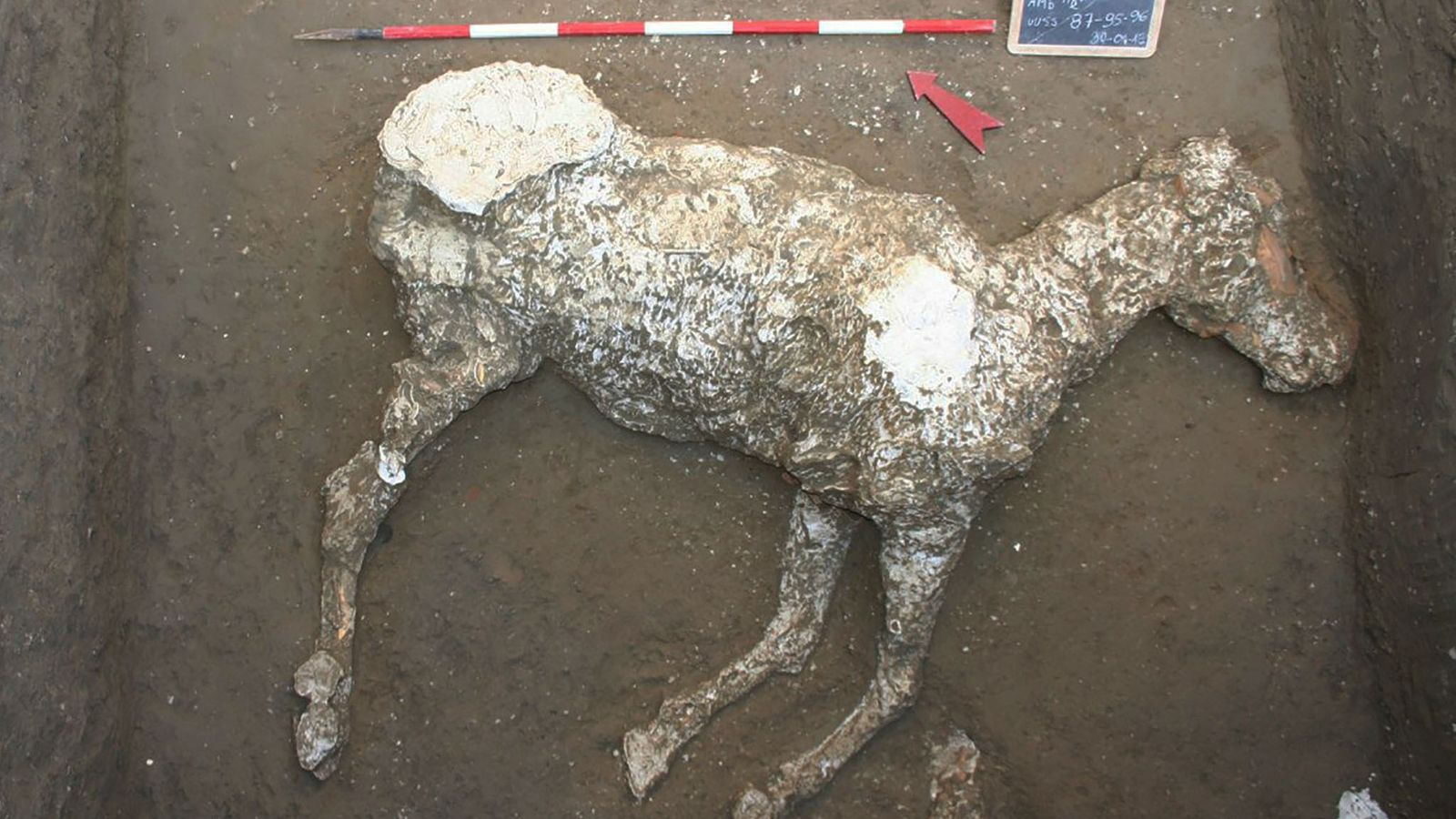 Después de que este caballo murió en la erupción del Vesubio, su cuerpo estaba cubierto de ...