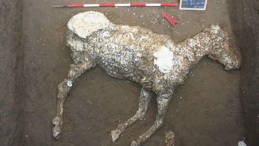 Caballos encontrados en Pompeya podrían haber estado preparados para huir de la erupción del Vesubio