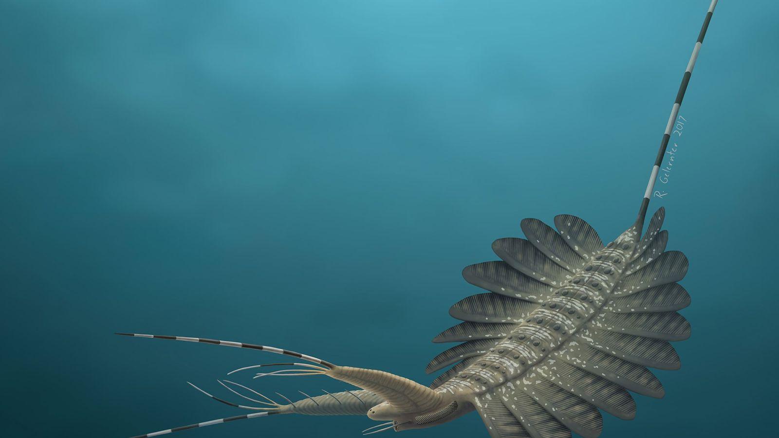 Una reconstrucción artística del Kerygmachela kierkegaardi, de 520 millones de años, representa a la especie como ...