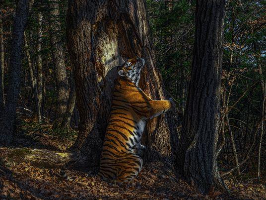 Descubre las mejores fotografías de vida silvestre del 2020