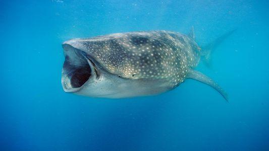 Los descubrimientos de los tiburones más fascinantes de la última década