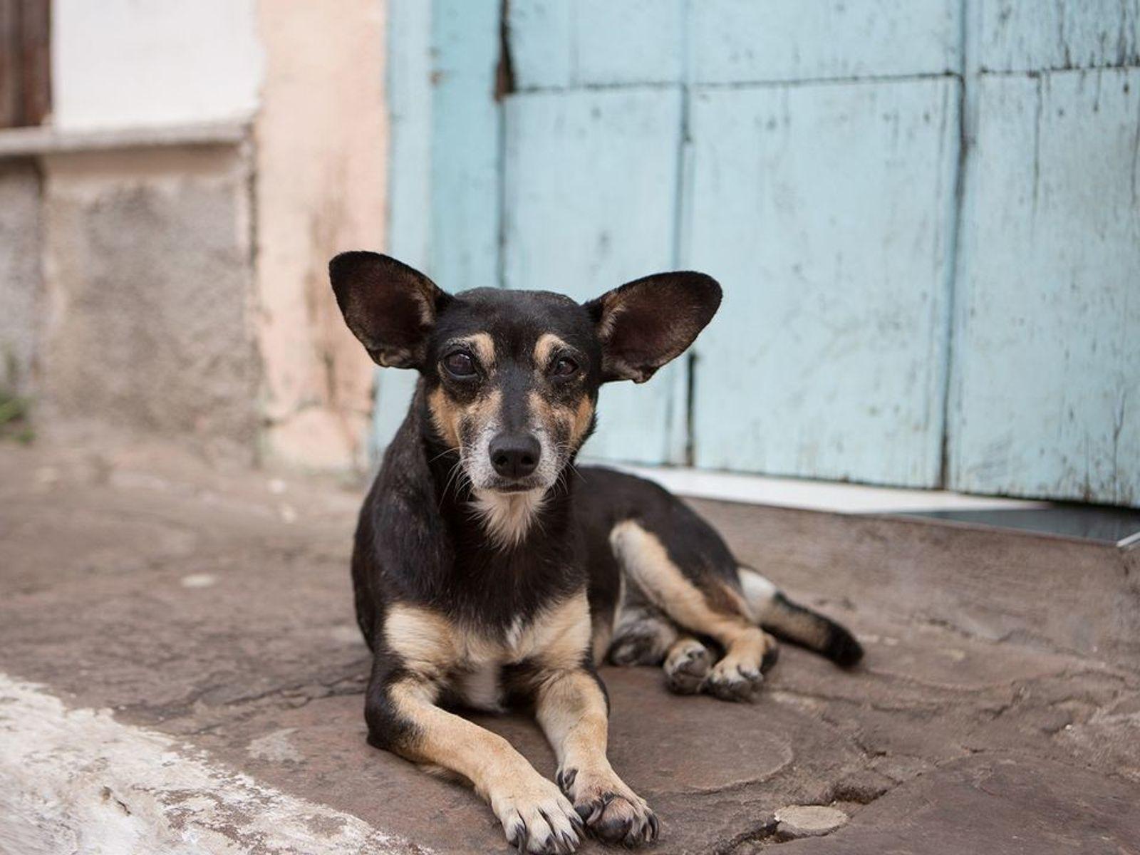 Un perro callejero en el parque nacional Chapada Diamantina de Brasil. En todo el mundo hay ...