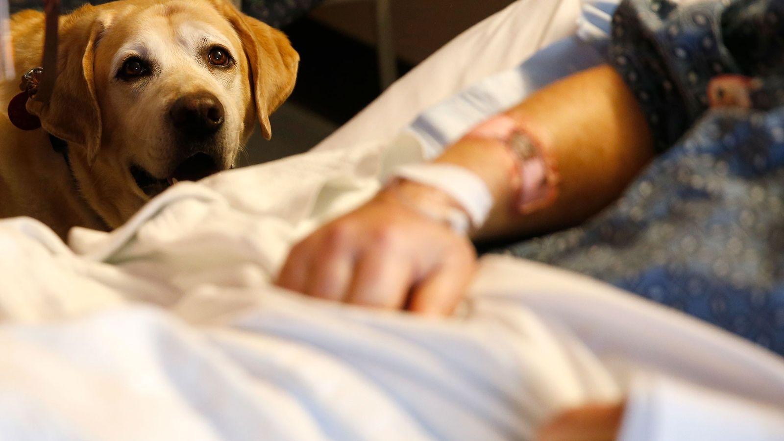 Perros Terapeúticos