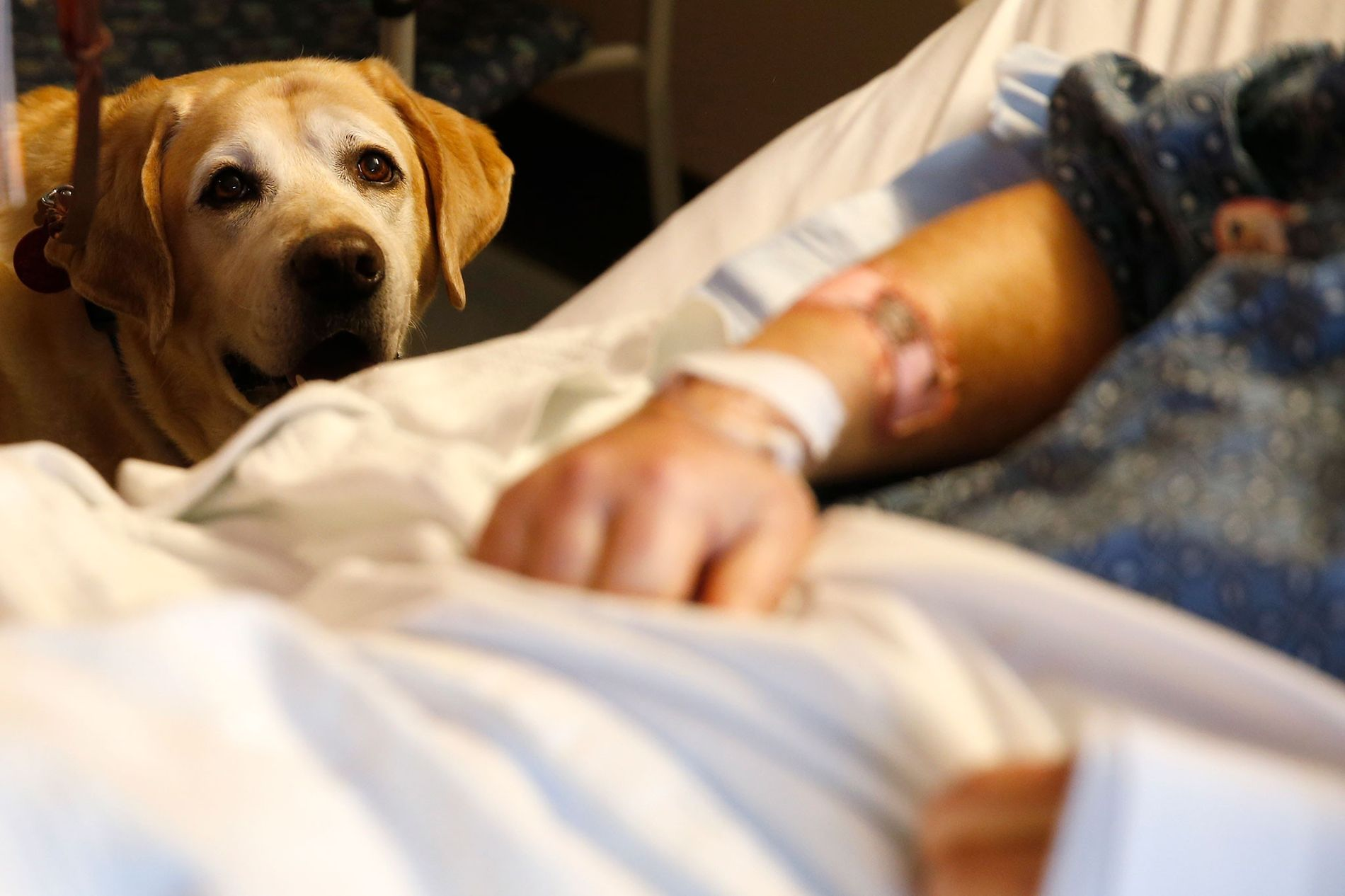 Un perro terapéutico llamado Tucker visita al paciente Jim Cawley en el Massachusetts General Hospital (Hospital General de Massachusetts) en Boston, el 6 de marzo de 2018.