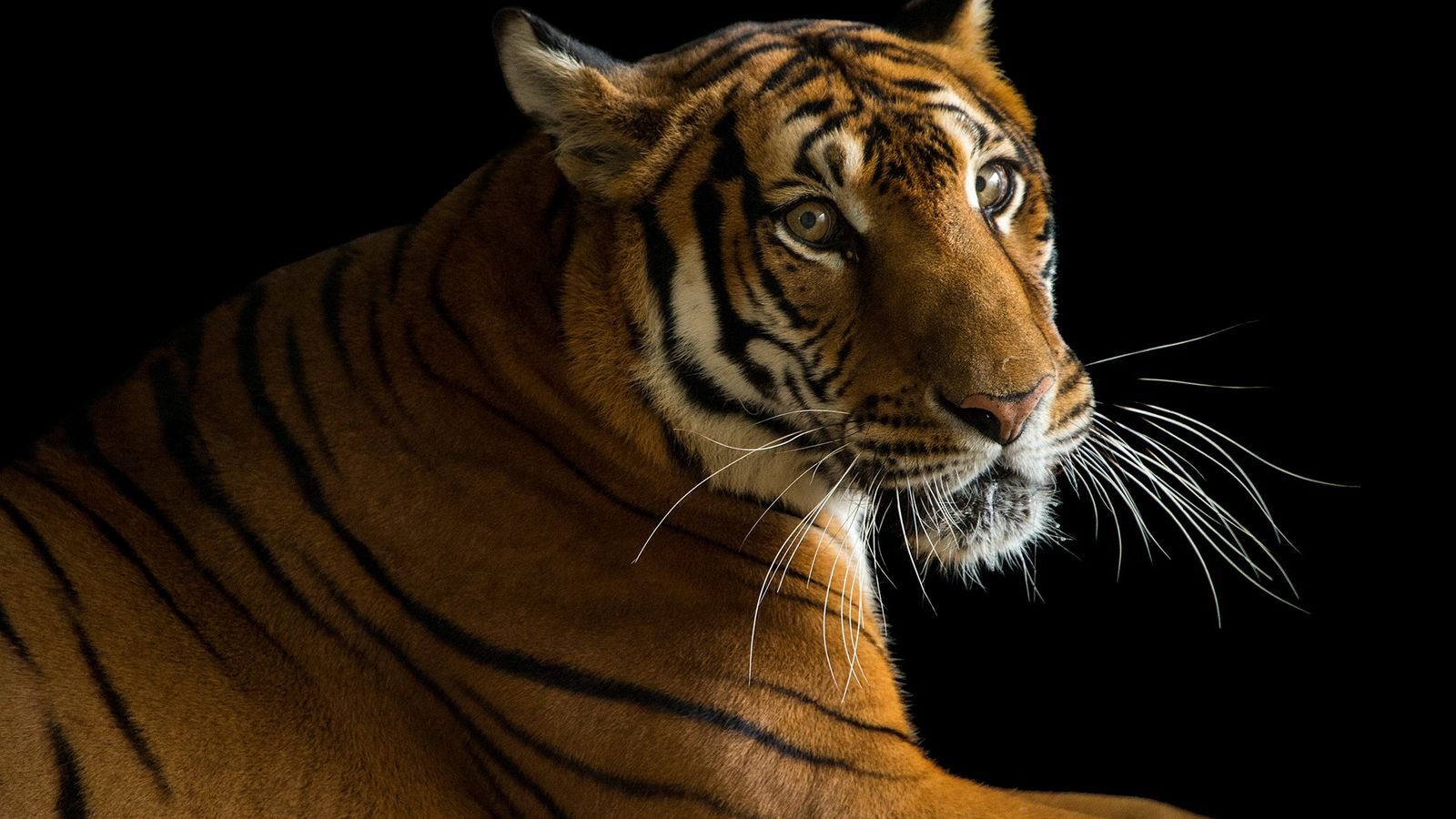 ¿Cuándo una especie está en peligro de extinción?