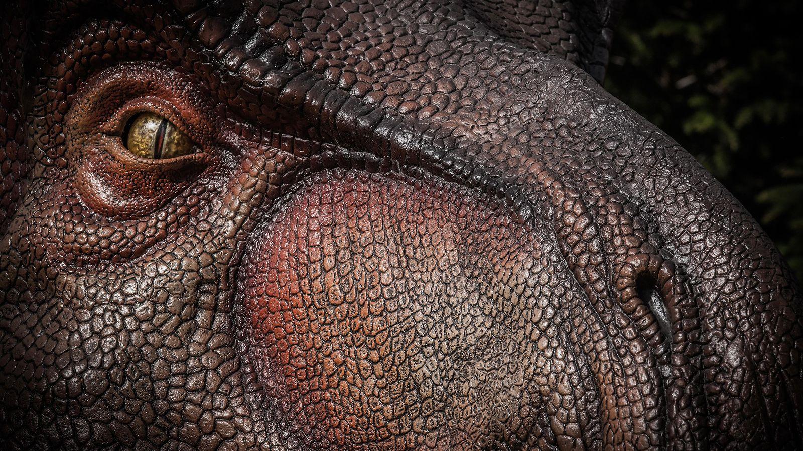 El Tyrannosaurus rex, visto aquí en una ilustración, probablemente tenía un sentido del olfato sólo un ...