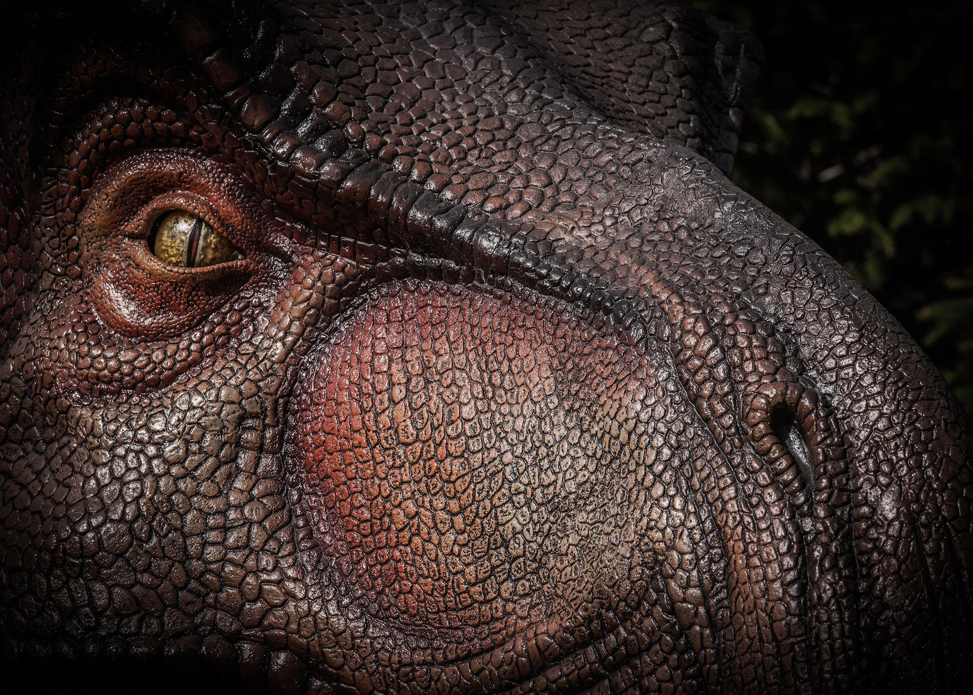 El Tyrannosaurus rex, visto aquí en una ilustración, probablemente tenía un sentido del olfato sólo un poco menos poderoso que el de un gato doméstico moderno.