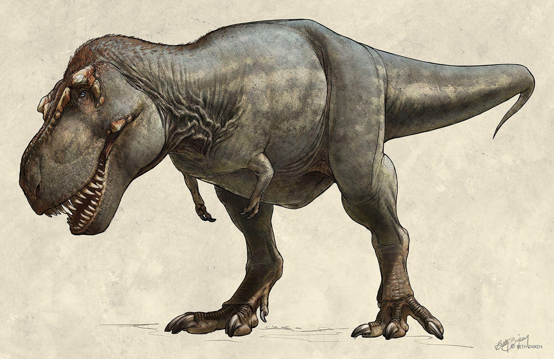 El espécimen de Tyrannosaurus rex descubierto en 1991, llamado Scotty, tenía un peso estimado de 8.845 ...