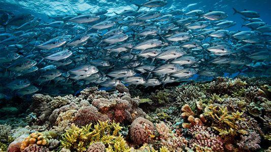 El arrecife de Tubbataha en Filipinas alberga casi la mitad de las especies de coral conocidas
