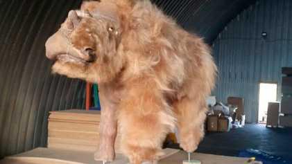 Reconstruyen rinoceronte lanudo extinto