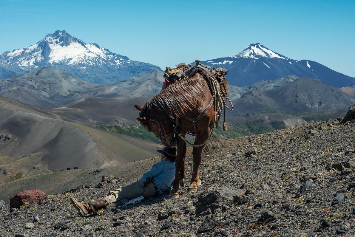 Un guía descansa a la sombra de su caballo, luego de un viaje de varios días ...