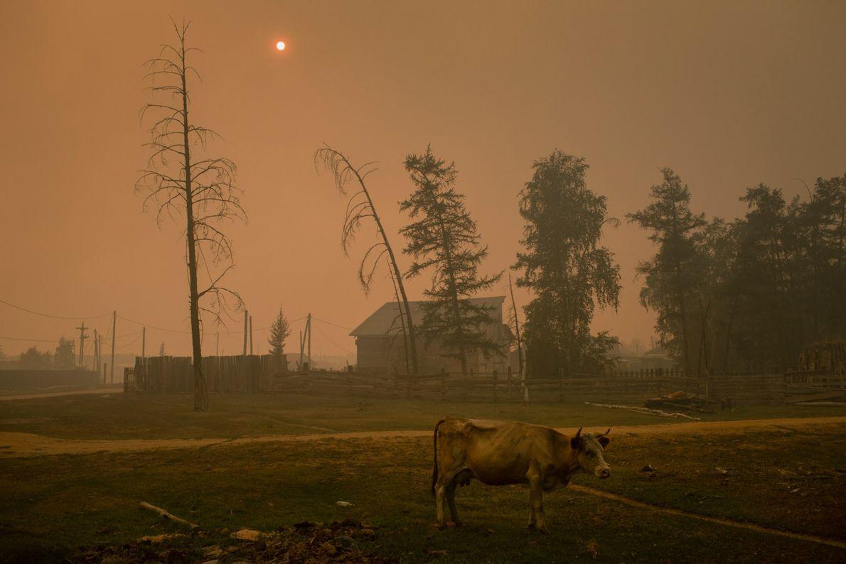 Siberian fires 019