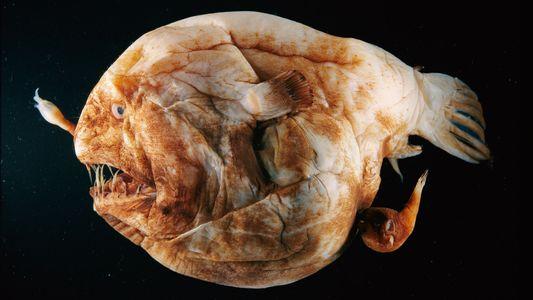 Cinco formas repugnantes e increíbles en que los animales eyaculan esperma