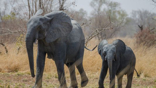Intensifican esfuerzos para revitalizar un parque nacional en África Occidental