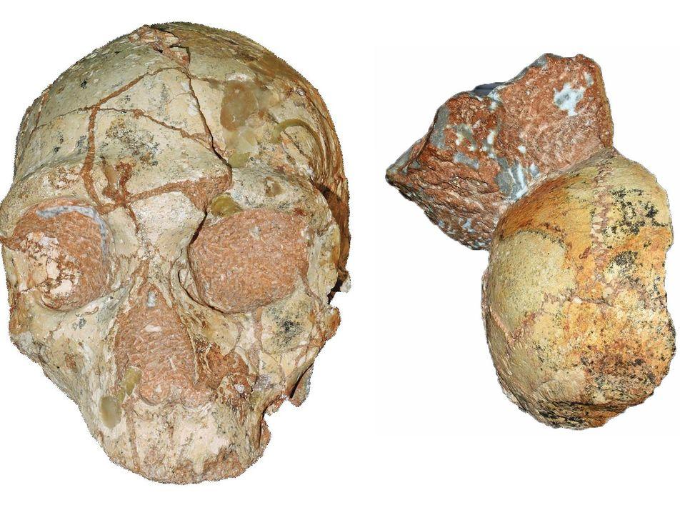 Se abre el debate: Habrían encontrado los restos fósiles de Homo sapiens más antiguos fuera de ...