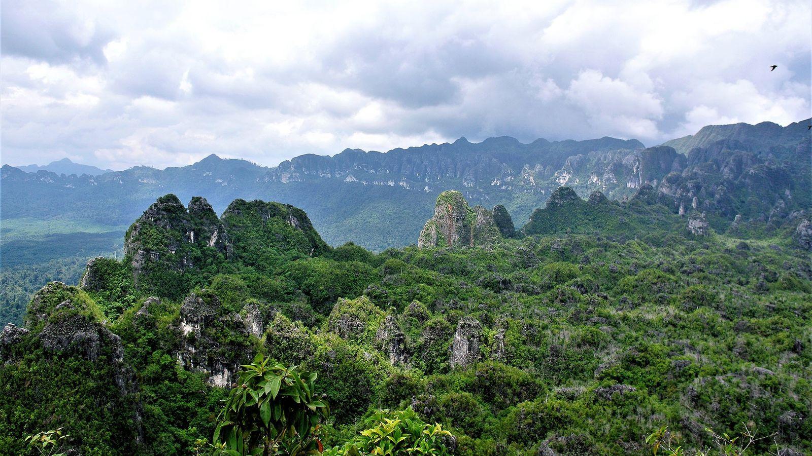 La galería de arte rupestre antiguo está escondida en las cuevas de piedra caliza de Kalimantan ...