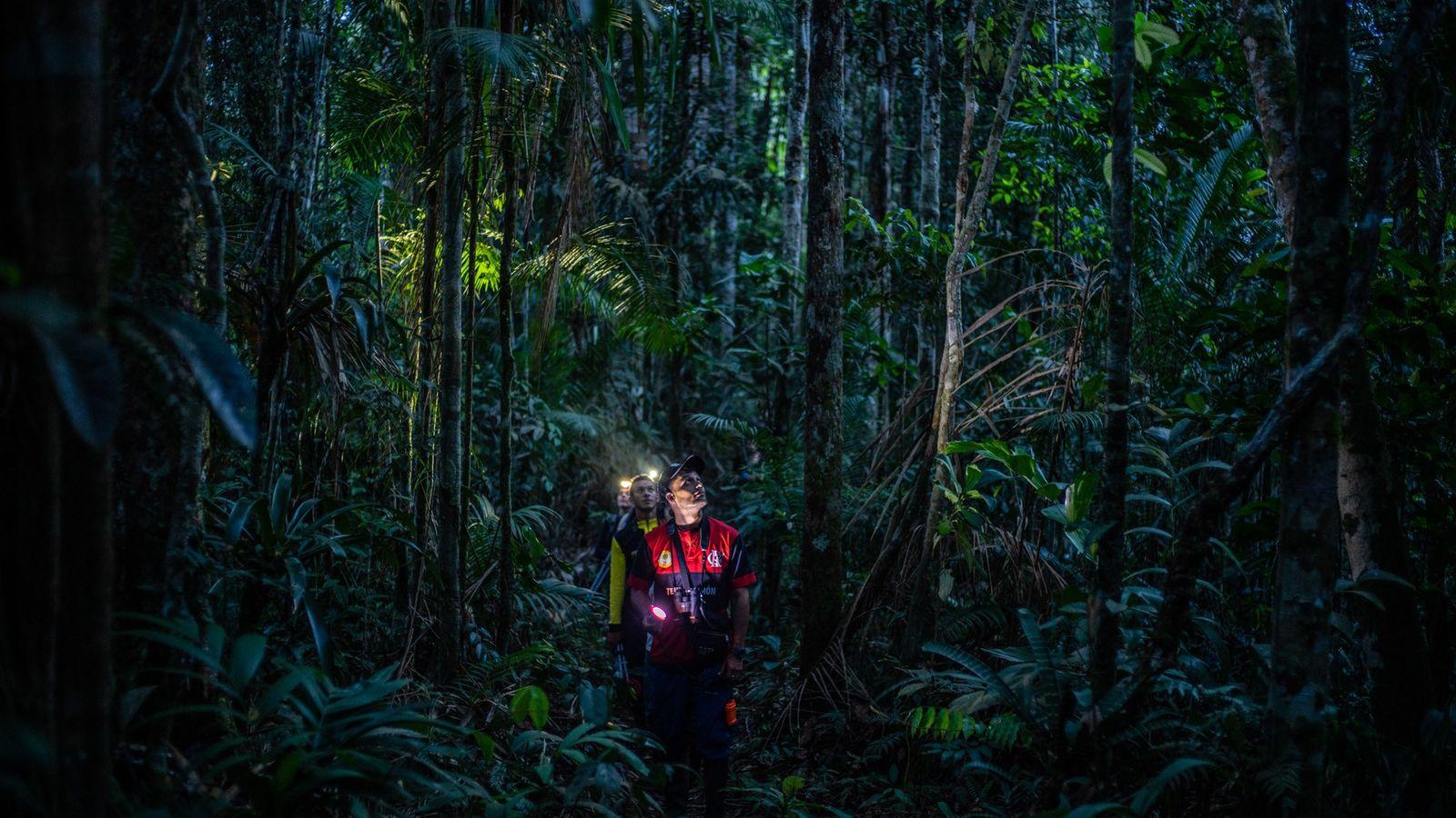 Un grupo de científicos busca búhos en un bosque remoto en Colombia, que solo ahora puede ...