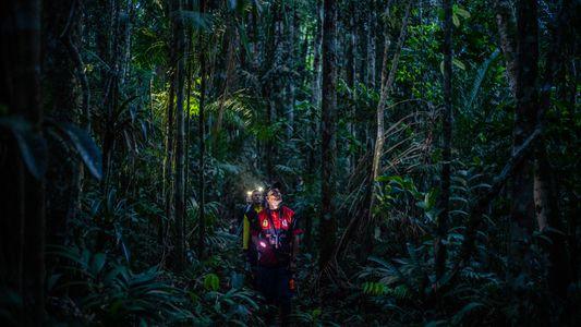 Colombia: tras décadas de guerra, la selva está abierta para la exploración