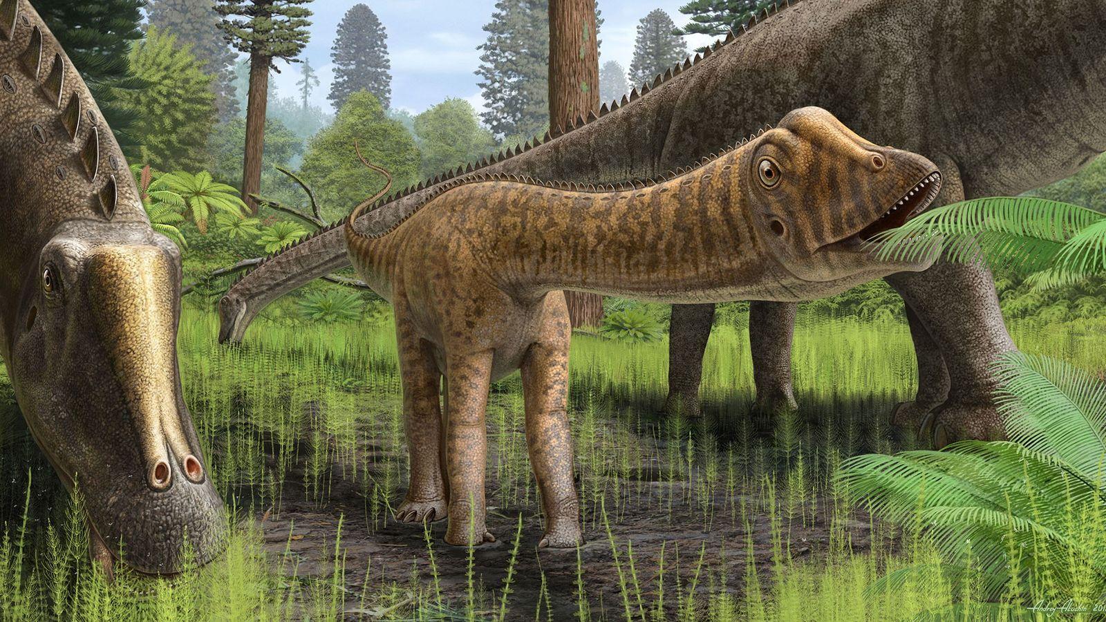 """Reproducción del joven """"Diplodocus"""" """"Andrew"""" en su entorno. Los dientes de Andrew eran diferentes a los ..."""